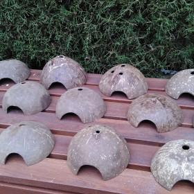 56 Cocos nucifera. Medio coco