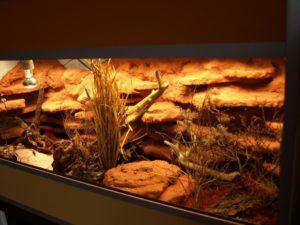 terrario-fundo-3d-desertico-pogona-leopard-gecko-etc-11224-MLB20041486911_022014-F