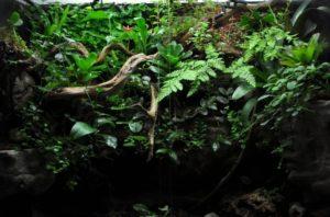 Gecko crestado-Terrario