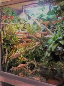 Rhacodactylus lechianus-terrario